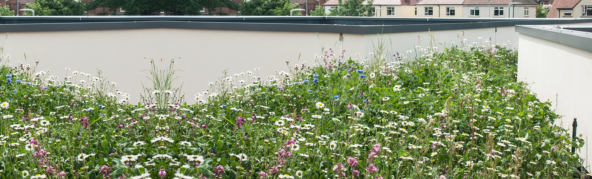 Wildflower Green Roof Systems
