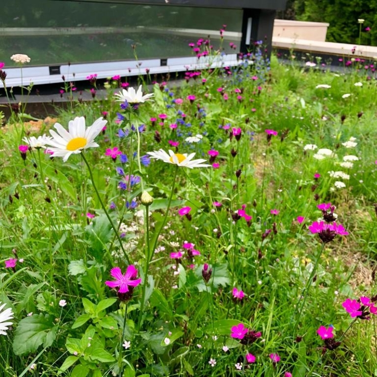 Semi-Intensive Green Roof System