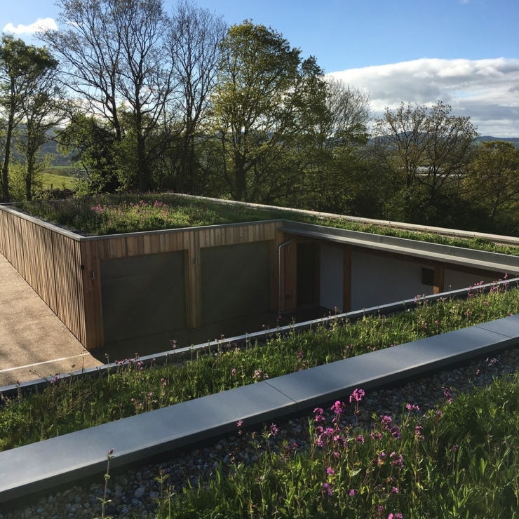 Wildflower Green Roof System